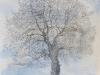 arbre déhanché lierre 2014