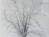 arbre mort 2014