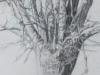 détail 2 arbre mort 2014