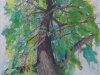 arbre-vert
