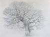 bel arbre 2014
