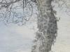 détail arbre déhanché lierre 2014