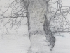 détail bel arbre 2014