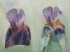 Iris corsets 2004