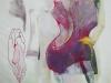 Iris guêpière 2003