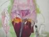 Iris bas 2003